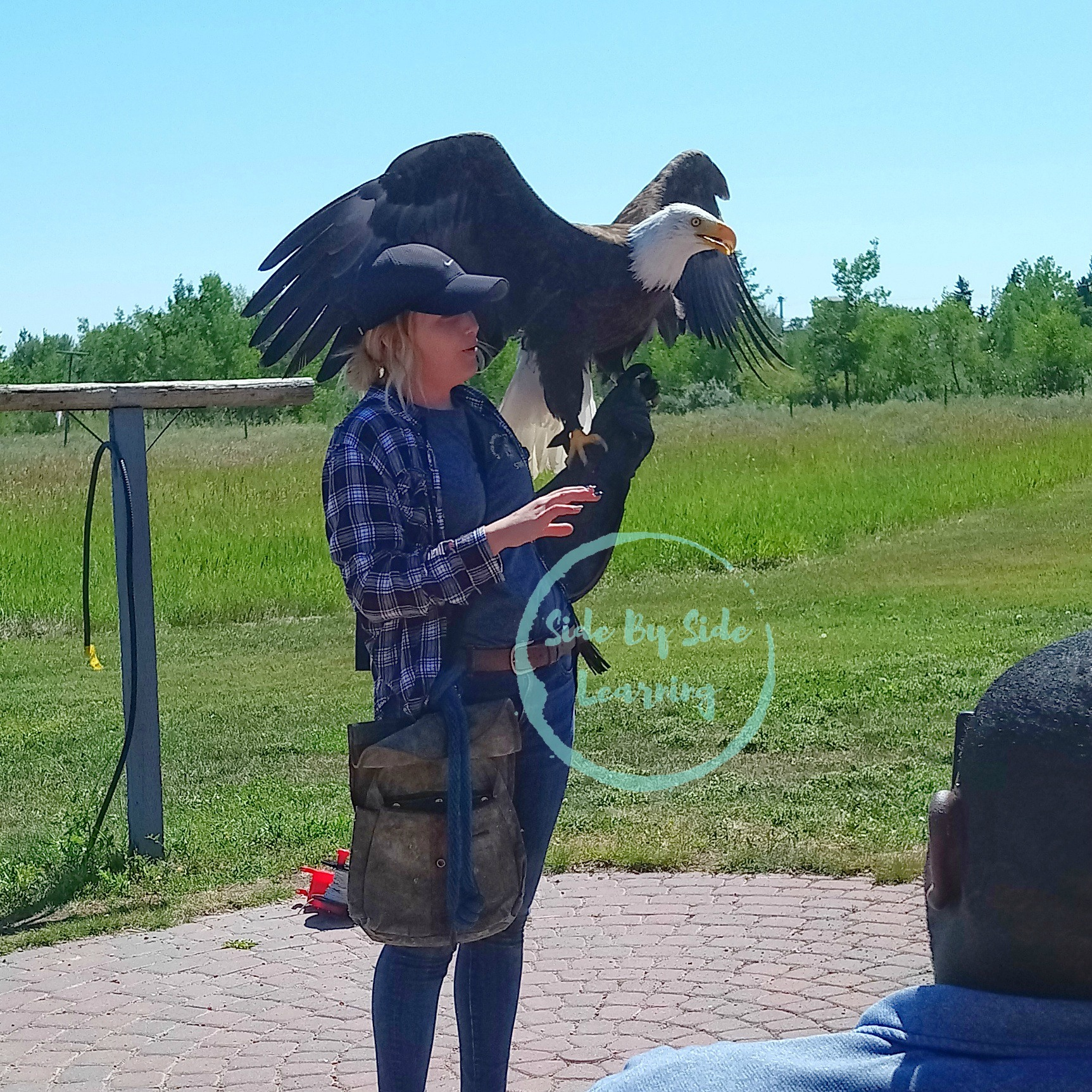 Bald Eagle with Handler